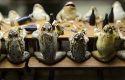 Sống động bảo tàng ếch nhồi bông tại Thụy Sĩ