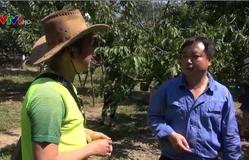 Nông dân thu nhập cao nhờ trồng cherry gắn với du lịch