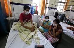 40 người tử vong vì cúm lợn tại miền Tây Ấn Độ
