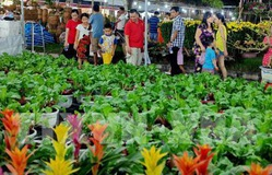 Ngập tràn sắc xuân tại Hội chợ hoa xuân Tết Kỷ Hợi 2019