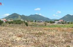 Nông dân Khánh Hòa ồ ạt bán đất trồng mía
