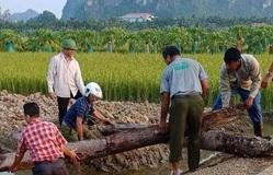Phát lộ bãi cọc nhọn bằng gỗ lim có niên đại từ thời nhà Trần ở Hải Phòng