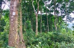 Bán tín chỉ carbon, Việt Nam có thể thu về hàng trăm triệu USD