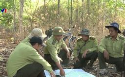 Tăng cường công tác quản lý, bảo vệ và phát triển rừng