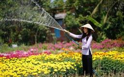 Làng hoa và công viên Sa Đéc thu phí tham quan từ quý IV/2018