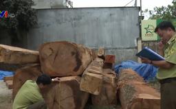 Khởi tố vụ cất giấu gỗ lậu gần kho doanh nghiệp