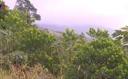 Quảng Trị: Phục hồi tài nguyên rừng trên vùng đất cằn
