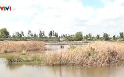 Hạn mặn ở ĐBSCL thời gian tới sẽ nghiêm trọng như thế nào?
