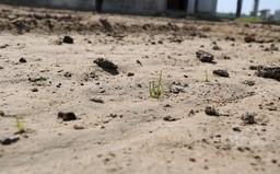 Xâm nhập mặn lên tới đỉnh điểm, người dân bỏ hoang đất đi làm thuê