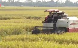Doanh nghiệp Trung Quốc tìm cách đầu tư sản xuất lúa gạo tại Việt Nam