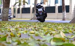 Hà Nội mùa lá sấu rụng