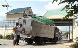 Vĩnh Long kiểm soát chặt việc vận chuyển lợn