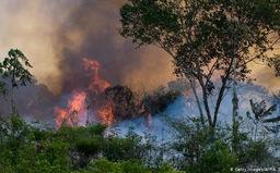 Hàng trăm người Brazil nhập viện do ảnh hưởng cháy rừng Amazon