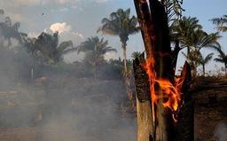 G7 sắp họp khẩn về cháy rừng Amazon
