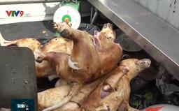 Cảnh báo nhiễm khuẩn gây bệnh vì ăn thịt chó