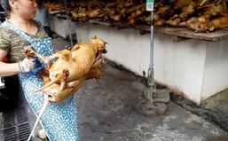 Trung Quốc: Thịt lợn đắt, người dân chuyển sang ăn thịt chó