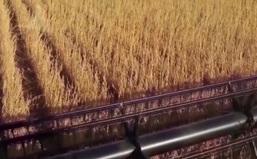 Giá các loại nông sản Mỹ giảm mạnh trong tuần qua