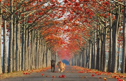 """""""Dạo chơi"""" những con đường đẹp như tranh vẽ"""