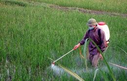 Lạm dụng thuốc bảo vệ thực vật, nông dân không có lãi