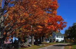 New England đẹp mọi ngõ ngách khi vào thu