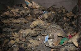Khánh Hòa: Nhức nhối nạn khai thác tận diệt rùa biển