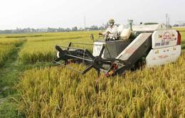 Tiếp tục Chương trình thí điểm bảo hiểm nông nghiệp