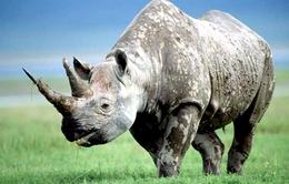 Nhu cầu mua sừng tê giác ở Việt Nam giảm 38%.