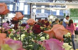 Ghé thăm lễ hội hoa lớn nhất châu Mỹ Latin