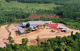 Mỏ vàng Bồng Miêu hoạt động trở lại từ 30/9