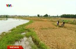 Xã Đồng Thái, Ba Vì: Dồn điền đổi thửa, dân mất ruộng