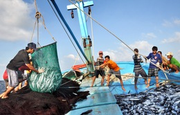 Thừa Thiên Huế: Tàu cá khai thác biển xa bờ tăng mạnh