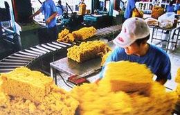 Xuất khẩu cao su: Sản lượng tăng nhẹ, kim ngạch giảm mạnh