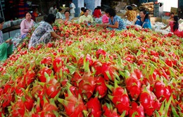 Châu Âu cảnh báo về hoa quả nhập khẩu từ Việt Nam