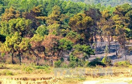 Hơn 4ha rừng phòng hộ Sóc Sơn bị thiêu rụi
