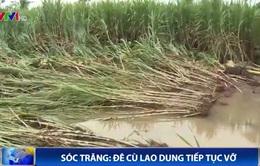 Sóc Trăng: Đê Cù Lao Dung tiếp tục vỡ