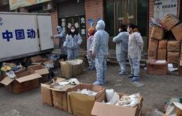 Cúm gia cầm H5N6 xuất hiện tại Trung Quốc