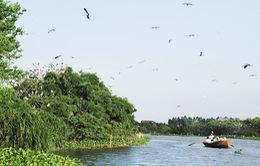 Đảo Cò, Hải Dương - Điểm du lịch bốn mùa hấp dẫn