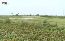 Hải Phòng: Hàng trăm ha đất nông nghiệp bị bỏ hoang