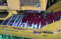 Khám phá cỗ máy hái quả Cherry bằng khẩu lệnh