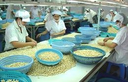 9 tháng, xuất khẩu hạt điều đạt gần 1,5 tỷ USD