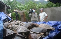 Phát hiện cơ sở cất giữ 1.000 con rùa biển tươi