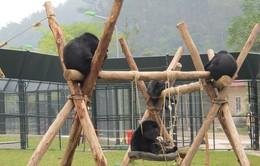 Khánh thành 4 khu bán tự nhiên cứu hộ gấu ở Việt Nam