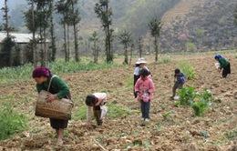 Tiêu chí xét chuẩn nghèo mới sẽ dựa trên 5 chiều từ năm 2015