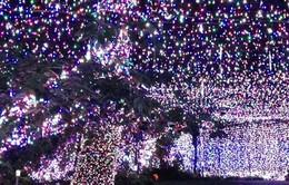 Australia: Trình diễn ánh sáng Giáng sinh đạt kỷ lục Guiness