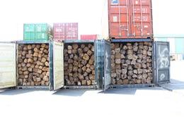 Khám xét 5 container gỗ lậu tại cảng Cát Lái