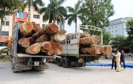 Thanh Hóa bắt hai xe chở gỗ quá tải 200%