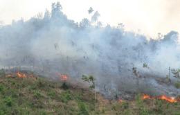 Hà Nội: Cháy lớn tại khu vực rừng Sóc Sơn