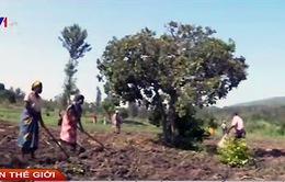 Rwanda: Nông dân chung tay đối phó với hạn hán