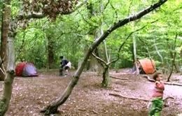 Thú vị với lớp học mẫu giáo... trong rừng
