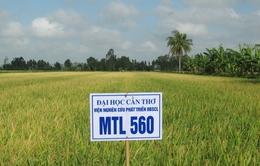 Thành lập Viện nghiên cứu lúa quốc tế đầu tiên tại Việt Nam